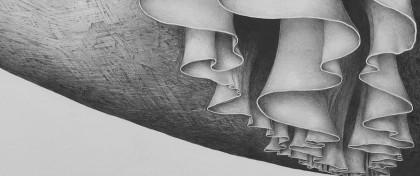 Mileniusz Spanowicz - Malarstwo ołówkowe